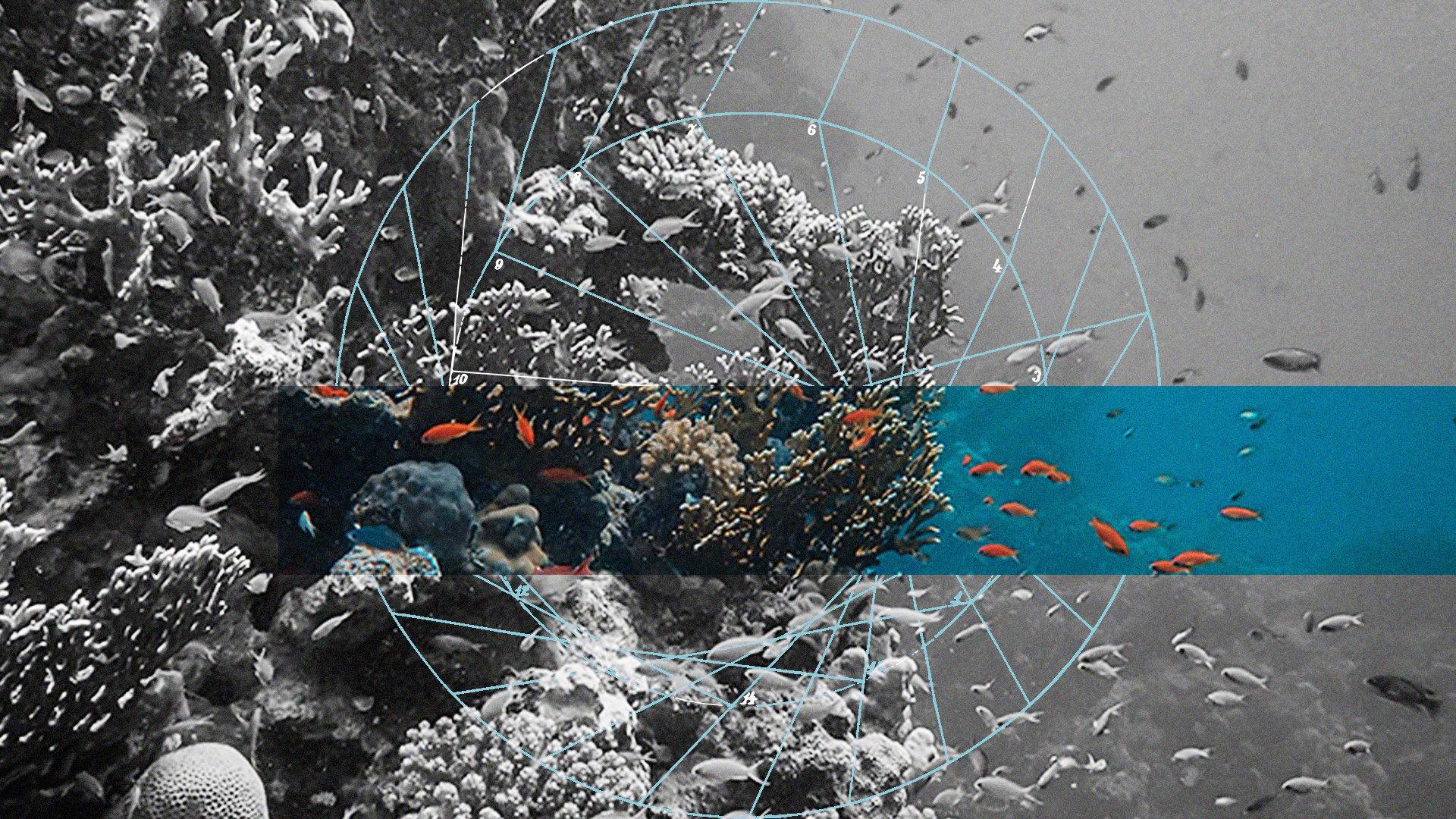 reef coin crypto